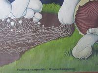 2013041214 - Affiche botanique champignon de JUNG KOCH QUENTELL, édition originale 82 x 115 cm sur barres de bois pour assurer la rigidité et lien en corde pour le maintien en position fermée. 80€ + 9€ de port.
