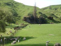 Nouvelle Zélande paisible