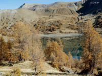 AUTOMNE au LAC D'ALLOS ... NATURE DOREE