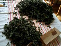 Nouveau : Des sachets de tisanes d'orties à vendre