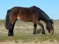 Puerto Madryn - Vitrine de la faune Patagonienne