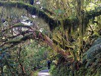 De Purakaunui Bay au Milford Sound