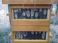 Des ruches et du miel