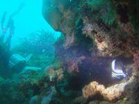 Photos sous-marines de Martinique