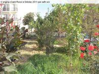 Vagues...Panorama  de Skikda (11/15):Camus Rossi au fil des années