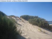 Vagues...L'été 2016 à la Marsa de Skikda : Blanc et noir