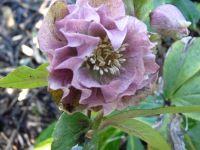 un échantillon de fleurs DOUBLES
