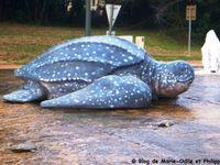 Format de la tortue Luth : 2,40 m X 2,40 m.