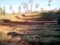 Production de huile essentielle