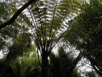 Le jardin exotique et botanique de Roscoff