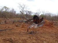 Dernières images avant de quitter le pays : Gestion du patrimoine forestier à la Mozambicaise