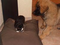 Idès & Maki! Ces deux là s'aiment comme chat et chien!!! :-) Il y en a toujours un pour chercher l'autre!