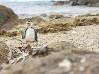 Petit Pingouin voyage...