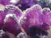 Fluorite on Quartz from Wuyi Mine, China (size: Small Cabinet)