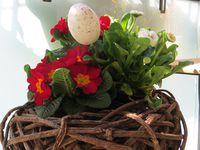 La vie de Pâques 2015 !