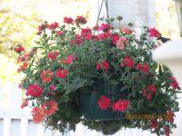 mon jardin 2014 les premieres fleurs