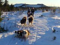Neige  -  Découverte chiens de traineaux CM2 [18h30]