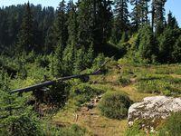Le sommet, les pipes dans des minis prairies et Vancouver, by dawn.