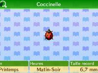 Les insectes (le filet) :