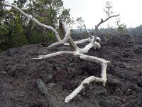 Volcans de Hawaï