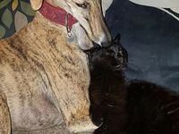 Nebia dans sa 2ème famille  ... et sa soeur Nieve adoptée il y a 1 an