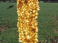 Fiche artiste: Andy Goldsworthy CP-CE1-CE2-CM1-CM2