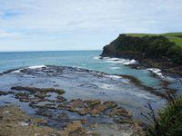 Petite pause déjeuner dans ce qu'on appelera la campagne néozélandaise (première photo) avec ses hectares de champs verts et ses moutons qui cambadent et broutent ! Apaisant! Puis direction Curio Bay, un autre arrêt où l'on a pu voir une forêt fossilisée. Mais bon, entre nous, on a pas trop remarqué la forêt ^^ mais cela restait très beau! (photo 2 & 3) Et là, arrivés à Waipapa Point, nous avons pu enfin voir des Sea Lions!! Ils faisaient tranquilement la sieste sur la plage mais c'était vraiment super de voir des espèces locales à l'état naturel!! :)