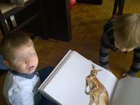 livre d'animaux