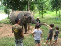 Au royaume des éléphants