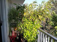 Cochenilles 1 / Bambous 0