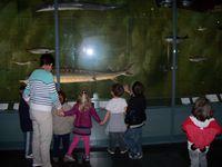Des coquillages, des poissons, des mammifères impressionnants par leur taille, mais aussi des insectes, des papillons, des oiseaux de toutes sortes...