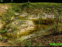 Trame verte et renaturation écologique par un particulier