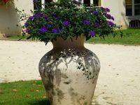 Bazemont , commune particulièrement fleurie !