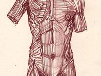 le corps à l'étude