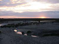 Grands espaces enivrants, petites mares à crustacés, ruisseaux de vase et lits de fleuves... La mer entre par l'étroite embouchure entourée de dunes. (photos de Claude Hubert)