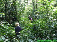 La forêt équatoriale de KAKAMEGA est intensément verte!