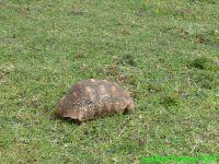 Passage de l'équateur, les tortues et le rift!