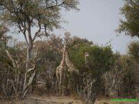 Botswana - 2 - ça plane sur l'Okavango!