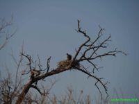 Botswana - 3 - entre désert et Eden !