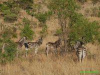 Afrique du Sud - 2 - Blyde River Canyon et Pilanesberg