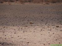 On ne croise presque personne sur les pistes namibienne alors les Mad-Max ont eu de la chance que nous passions par la même route!