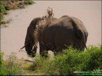 Des éléphants ici?!