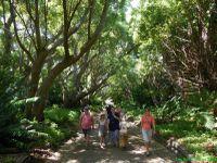 Jardin botanique de Capetown