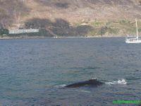 Enfin une baleine! Et vivante cette fois! Elle est même accompagnée d'otaries.