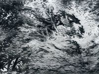 feuillages au fusain-Kerguéhennec-automne 2012