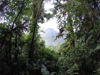 Arenal Volcano and the long steep muddy jungly hike to Cerro Chato