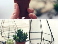 DIY: Plants &amp&#x3B; Terrariums