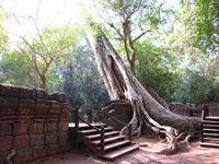 Temple de Ta Prohm, Angkor, Cambodge