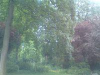 Magnifique Parc Monceau au mois de mai