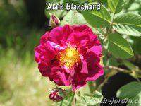 Journées de la rose à Chaalis 2014 2/2